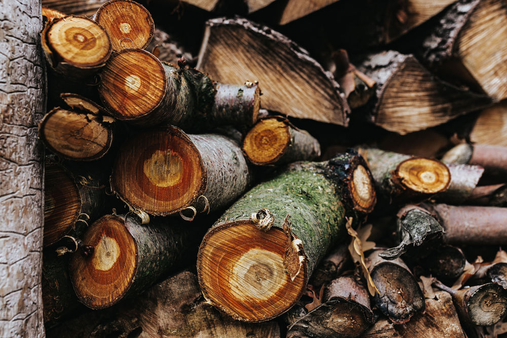 Avizul de toaletare-defrisare arbori - RO GARDEN